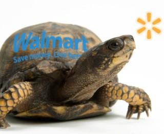 walmart-turtle-carousel-a